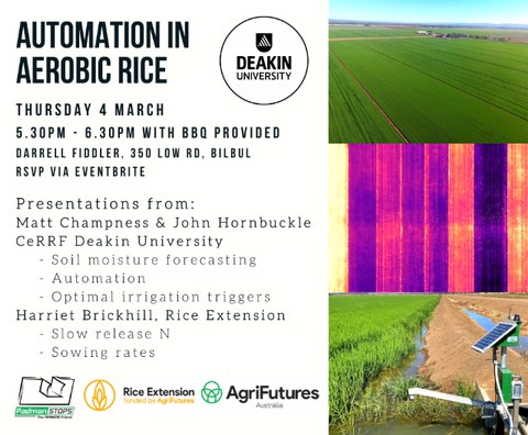 Aerobic Rice Field Walk